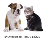 Stock photo puppy and kitten group of cats and dogs in front of white background 557315227