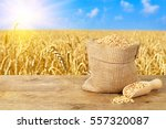wheat grains in sack. bag of... | Shutterstock . vector #557320087
