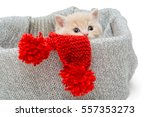 Stock photo little kitten in box with knitted scarf isolated on white 557353273