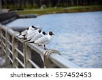 Six Seagulls Sitting On Metal...