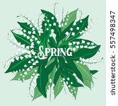 round of spring lily of the... | Shutterstock .eps vector #557498347