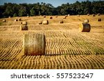 Hay In The Farm Fields Of...