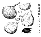onion hand drawn set. full ... | Shutterstock . vector #557544457