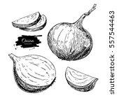 onion hand drawn set. full ... | Shutterstock . vector #557544463