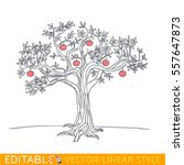 apple tree drawing. editable... | Shutterstock .eps vector #557647873