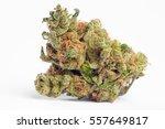 close up of blue walker... | Shutterstock . vector #557649817