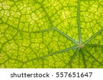 leaf abstract background... | Shutterstock . vector #557651647