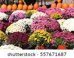 Beautiful Display Of Fall Mums...
