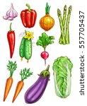 vegetables sketch of garlic ... | Shutterstock .eps vector #557705437