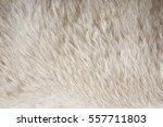 Brown Bear Hair Texture...