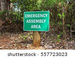 a green sign attached to a... | Shutterstock . vector #557723023