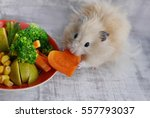 Hamster Eating Carrots.