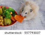 Stock photo hamster eating carrots 557793037