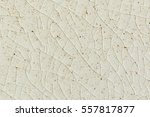 close up background and texture ... | Shutterstock . vector #557817877