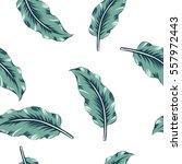 banana palm leaves on the white ... | Shutterstock .eps vector #557972443
