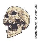 anatomic grunge skull vector... | Shutterstock .eps vector #557984983