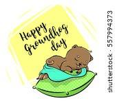 happy groundhog day vector... | Shutterstock .eps vector #557994373
