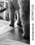 Small photo of Black and white photograph of dog's legs and cat's tail at open door threshold.