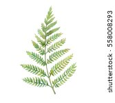watercolor fern leaf. hand... | Shutterstock . vector #558008293