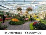 chiangmai   thailand   jan 2...   Shutterstock . vector #558009403