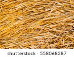 Hay Bale. Agriculture Field...