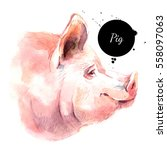 watercolor hand drawn pig head... | Shutterstock . vector #558097063