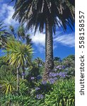 Small photo of Border with Cordyline, Agapanthus and a palm growing on Tresco