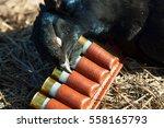 bird hunting in the summer  gun ... | Shutterstock . vector #558165793
