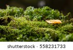water drops on green moss and... | Shutterstock . vector #558231733