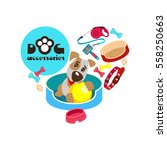 collection of dog accessories ...   Shutterstock .eps vector #558250663