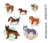 dog breed silhouette colorful... | Shutterstock .eps vector #558293977