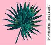 exotic flowers set. botanical... | Shutterstock .eps vector #558316057