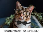 Stock photo scientist gentleman cat with glasses 558348637