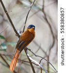 small beautiful colored... | Shutterstock . vector #558380857