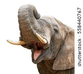 Closeup Of Elephant With Mouth...