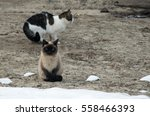 Two Cats Sitting On The Ground