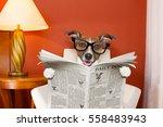 jack russell dog reading... | Shutterstock . vector #558483943