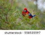 Parrot Crimson Rosella On A Tree