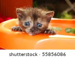 Stock photo curious kitten tries to exit the basket 55856086
