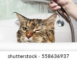 Stock photo funny cat wet cat 558636937