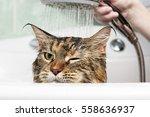 funny cat. wet cat | Shutterstock . vector #558636937