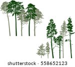 illustration with pine trees... | Shutterstock .eps vector #558652123