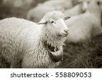 retro and vintage mood silver... | Shutterstock . vector #558809053