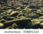 Stones Covered With Silt At Th...