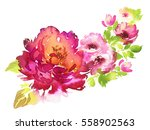 flowers watercolor illustration.... | Shutterstock . vector #558902563