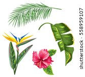 tropical leaves and flowers set.... | Shutterstock .eps vector #558959107