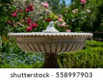 Fountain. Roses On A Background.