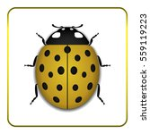 ladybug small icon. yellow lady ... | Shutterstock .eps vector #559119223
