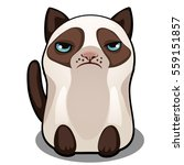 Snowshoe Siamese Grumpy Fat Ca...