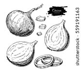 onion hand drawn set. full ... | Shutterstock . vector #559191163